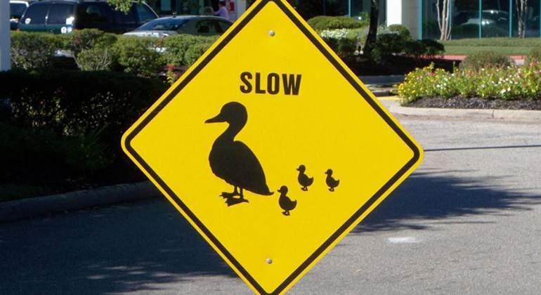 señal patos cruzando